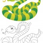 ������, ������: Striped snake