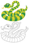 Striped snake — Stock Photo