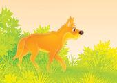 Wild dog dingo — Stock Photo