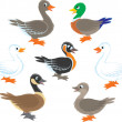 Ducks and geese — Stock Vector #30853615