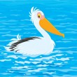 Stock Vector: Pelican