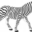 Zebra — Stock Vector #30854411