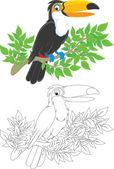 Toucan bird on a branch. — Stock Vector