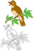 Nightingale — Stock Vector