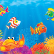 Underwater scene of colorful tropical fish — Stock Photo