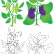 Eggplant and pea plants in color and outline — Lizenzfreies Foto