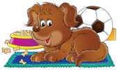 Brown puppy resting on a rug near a dish of dog food and a soccer ball. — Stock Photo