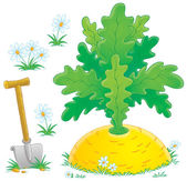 Shovel in the ground with white flowers, around a giant turnip — Stock Photo