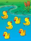 集团的快乐黄色小鸭在池塘里玩. — 图库照片