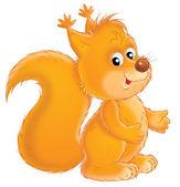 Orange squirrel — Stock Photo
