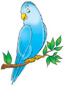Friendly blue parakeet perched on a tree branch. — 图库照片