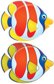 Tropical fish in profile — Stock Photo
