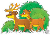 Male and female deer standing in bushes. — Stock Photo