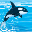 Killer whale — Stock Photo #33063305