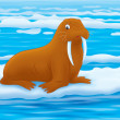 Walrus — Stock Photo #33063385