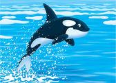 Killer whale — Stock Photo
