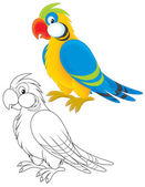 Papuga — Zdjęcie stockowe