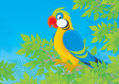 Parrot in jungle — Stock Photo