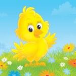 Chick — Stock Photo #34492005