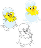 Hatched Chick — Stock Vector