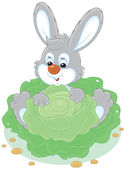 Bunny with a cabbage — Stock Vector