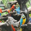 Colorful parrot on tree branches — Stock Photo