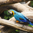 Colorful blue parrot on tree branches — Stock Photo