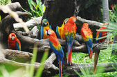 Colorful parrots on tree branches — Stock Photo