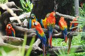 Perroquets colorés sur les branches de l'arbre — Photo