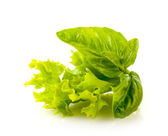 Basil and lettuce on white background — Stock Photo