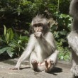 Monkey — Stock Photo #24364409