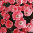 Tulipes — Photo #24534415