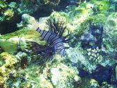 Su altında yaşam — Stok fotoğraf