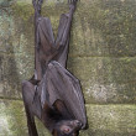 Night bat — Stock Photo