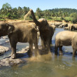 Elephants — Stock Photo #26422847