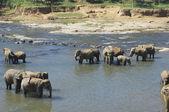 слоны — Стоковое фото