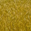 Stock Photo: Wheat background