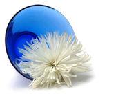 Chrysanthemum beauty treatment — Stock Photo