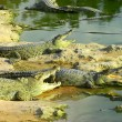 Alligators on beach — Stock Photo #27266927