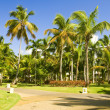Tropical park — Stock Photo