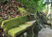 Tropical park — Stock Photo