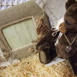 Teddy bear in hay — Stock Photo #40653873