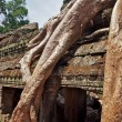 Roots covering stones of Angkor Wat temple — Stock Photo #51655311