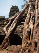 Roots covering stones of Angkor Wat temple — Stock Photo