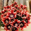 Beautiful bouquet of red tulips — Stock Photo
