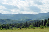 Beautiful green mountains in Ukraine — Stock Photo