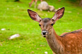 Small deer in a forest — Stock Photo