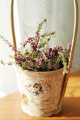 Beautiful purple heather in a vintage wooden pot — Photo
