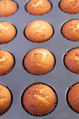 Cupcakes — Stock fotografie