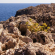 Sea landscape with rock. Agia Napa — Stock Photo
